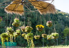 Progettazioni del giardino con il vaso di fiore d'attaccatura Immagine Stock