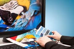 Progettista sul lavoro. Campioni di colore. Fotografia Stock