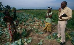 Progetto di agricoltura nell'Uganda Fotografie Stock