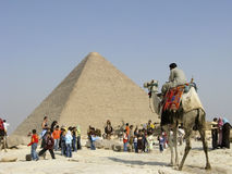 Programa piloto del camello en Giza Imagenes de archivo