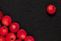 Programmes de corail rouge Photos stock