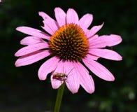 Programmfehler auf einer Blume Stockfoto