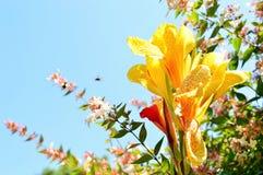 Programmfehler auf einer Blume Lizenzfreie Stockbilder