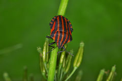 Programmfehler und Käfer Stockbilder