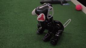 Programujący zabawkarski robot Interaktywny inteligentny zwierzę domowe zdjęcie wideo