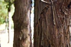 Progresión de la corteza del pino Fotos de archivo libres de regalías