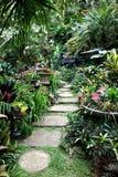 Progresiones toxicológicas en el jardín Barbados de Huntes fotografía de archivo