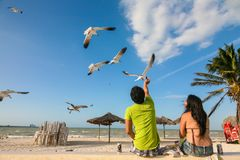 Mexican couple feeding gulls on a beach in Progreso near Merida, Stock Images