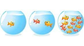 Progressão dos aquários das gerações do peixe dourado Imagens de Stock Royalty Free