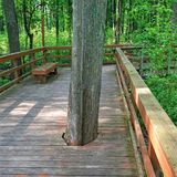 Progress doesn& x27;t always mean killing every inconvenient thing in the way. A tree growing through a walkway Royalty Free Stock Photography