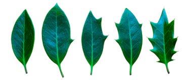 Progress of leafs on white background stock photo