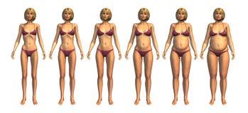 Progression de poids : Poids insuffisant au poids excessif illustration de vecteur