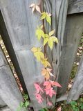 Progression of fall Stock Photography
