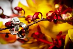 Prohibición del anillo de compromiso y de la boda fotografía de archivo libre de regalías
