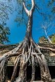 Prohm Angkor Wat Kambodja för ta för Banyanträd Royaltyfria Foton