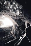 Prohm d'Angkor ta Photographie stock