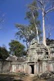 prohm ta Камбоджи Стоковая Фотография
