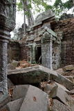 prohm ta Камбоджи angkor Стоковые Фото