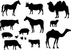 Proietta l'animale illustrazione di stock