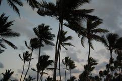 Proietti le palme Fotografie Stock