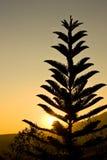 Projectile de silhouette Photographie stock libre de droits