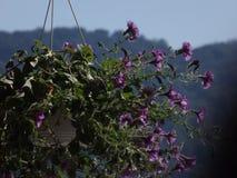 Projectile magique Fleurs Montagne Photo libre de droits