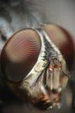 Projectile micro de tête de mouche Photo stock