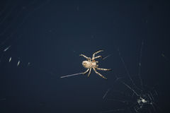 Projektów insektów pająk Zdjęcie Stock