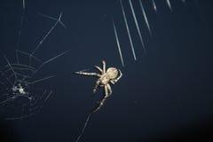 Projektów insektów pająk Fotografia Royalty Free