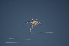 Projektów insektów pająk Obraz Stock