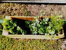 Projekt-Garten stockfotografie