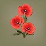 projekt kwiecisty abstrakcyjne czerwone maki Maczek z liśćmi Zdjęcie Royalty Free