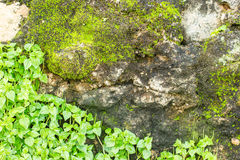 Projekta abstrakta powierzchni szary bezszwowy kamienny granit Zdjęcie Royalty Free