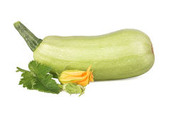 projekta element odizolowywał szpik kostny przedmiota warzywa Fotografia Stock