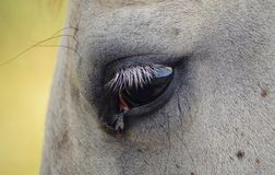 projekta elementu oka koń zdjęcie royalty free