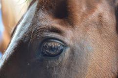 projekta elementu oka koń Zdjęcia Royalty Free