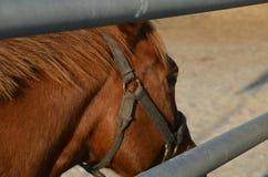 projekta elementu oka koń Obrazy Royalty Free