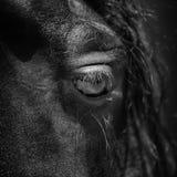 projekta elementu oka koń Fotografia Royalty Free