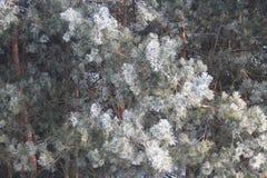 projekta wizerunku drzewa zima obrazy royalty free