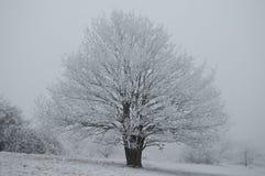 projekta wizerunku drzewa zima Fotografia Stock