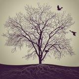 projekta wizerunku drzewa zima Zdjęcie Royalty Free