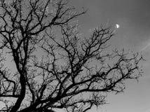 projekta wizerunku drzewa zima obrazy stock