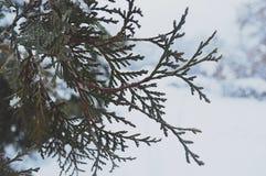 projekta wizerunku drzewa zima Zdjęcia Stock