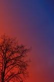 projekta wizerunku drzewa zima Zdjęcie Stock