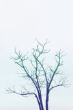 projekta wizerunku drzewa zima Obraz Royalty Free