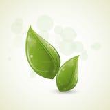 projekta zieleni liść Zdjęcia Royalty Free