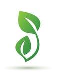 Projekta zielony liść Fotografia Stock