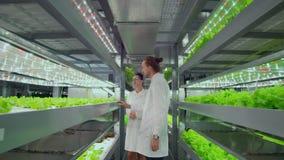 Projektchef - växande organiska grönsakbildskärmar arbetet av anställda och röstningar resultaten av skördkameran stock video