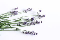 Projektująca akcyjna fotografia Dekoracyjnego życia kwiecisty skład wciąż Świezi kwiaty odizolowywający na biały drewnianym lawen Fotografia Royalty Free