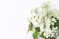 Projektująca akcyjna fotografia Dekoracyjny kwiecisty skład Dziki urodzinowy bukiet kwitnąć białej pokrzywy, bez, krowy pietruszk obrazy stock